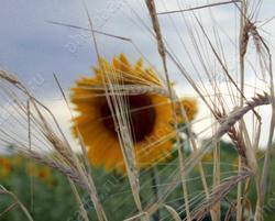 Саратовские аграрии получили по страховкам больше 65 млн