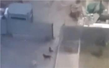 Неизвестные напали с ножом на отловщиков бродячих собак в Красноярске