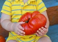 Ученые выявили у помидоров зачатки нервной системы