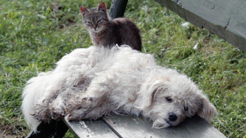 Приют под Иркутском обвинили в убийстве 50 тысяч кошек и собак