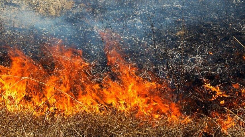 Трое спасателей пострадали при тушении пожаров в Карелии — репортаж