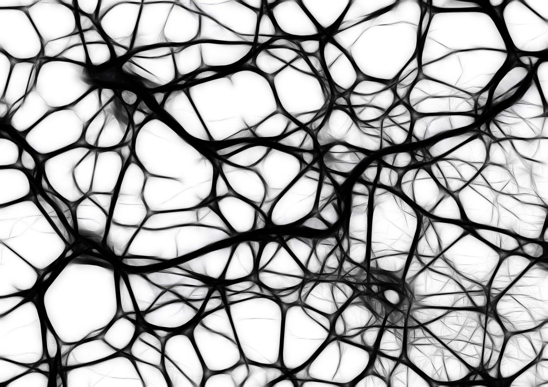 Учёные определили уникальные характеристики нейронов человека