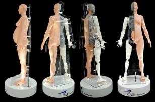 Американцы учатся принимать роды на роботе, созданном при помощи 3D-печати