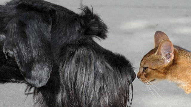 Videnskab (Дания): кто умнее — кошки или собаки?