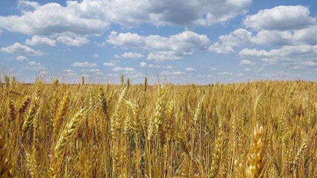 Корреспондент (Украина): урожайный год