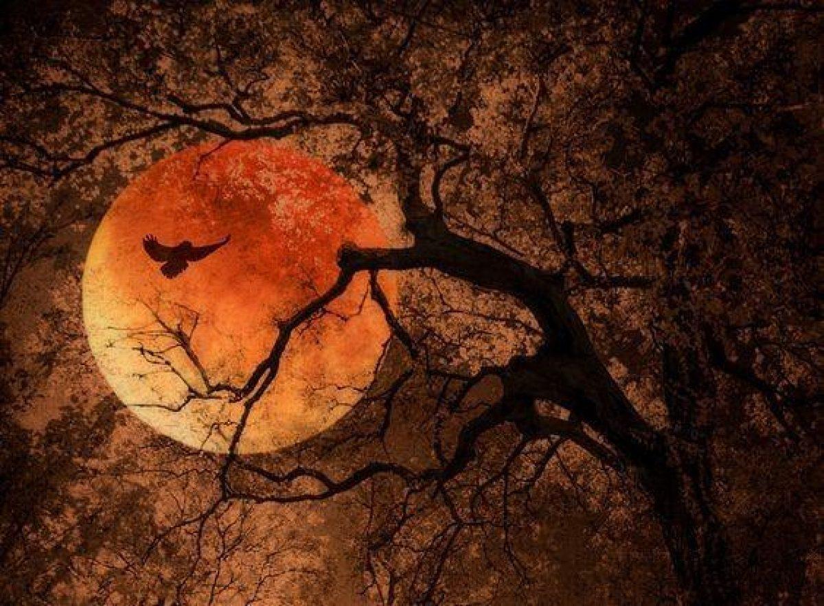 Роковое полнолуние 2021 в июле - что будет с каждым из нас, гороскоп для знаков Зодиака
