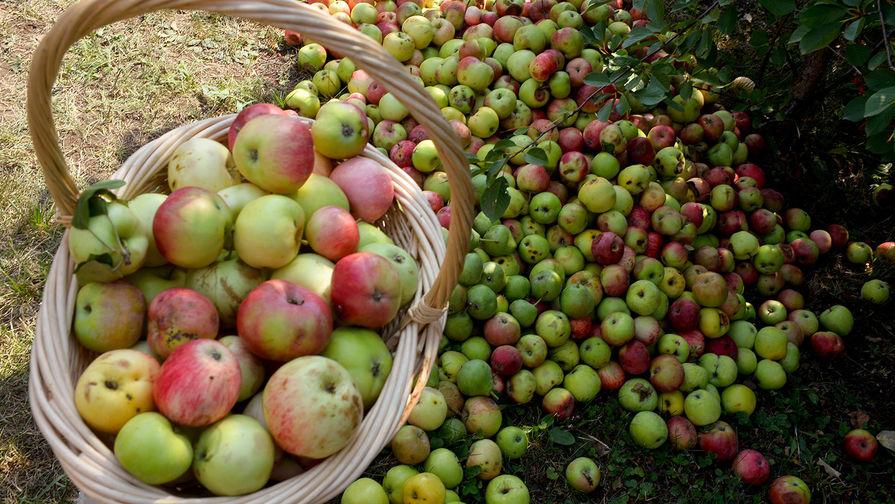 В России резко выросли цены на яблоки
