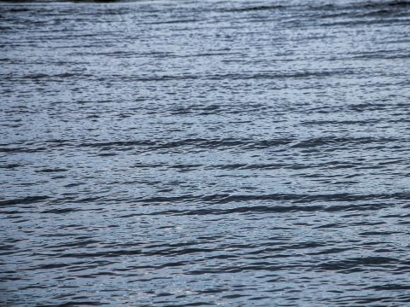 Юноша утонул во время празднования выпускного в Ленобласти