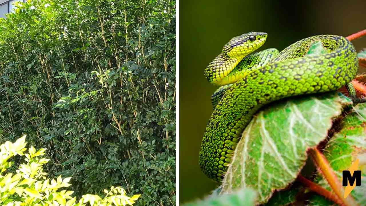 На фото в кустах спряталась змея, но найти её смогут лишь избранные. Главный приз — остаться с целой ногой