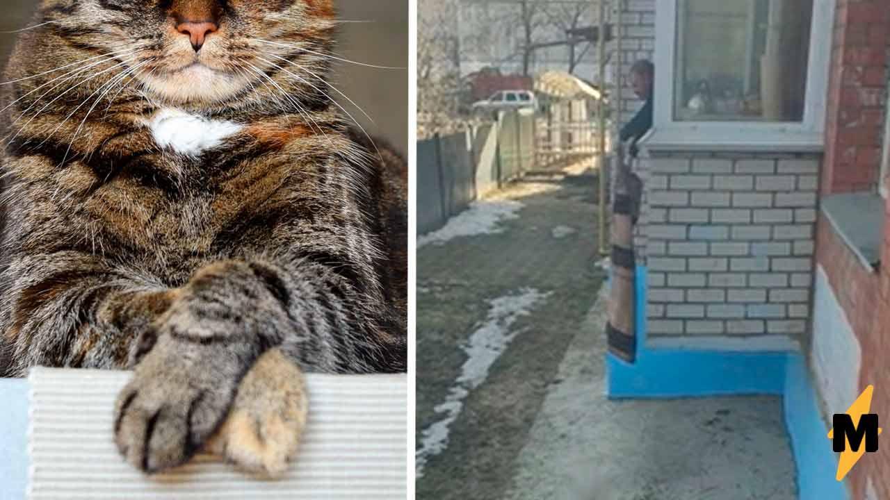 Ради котов хозяин каждый день становится Рапунцель. Достаточно увидеть, как он впускает их с прогулки в дом