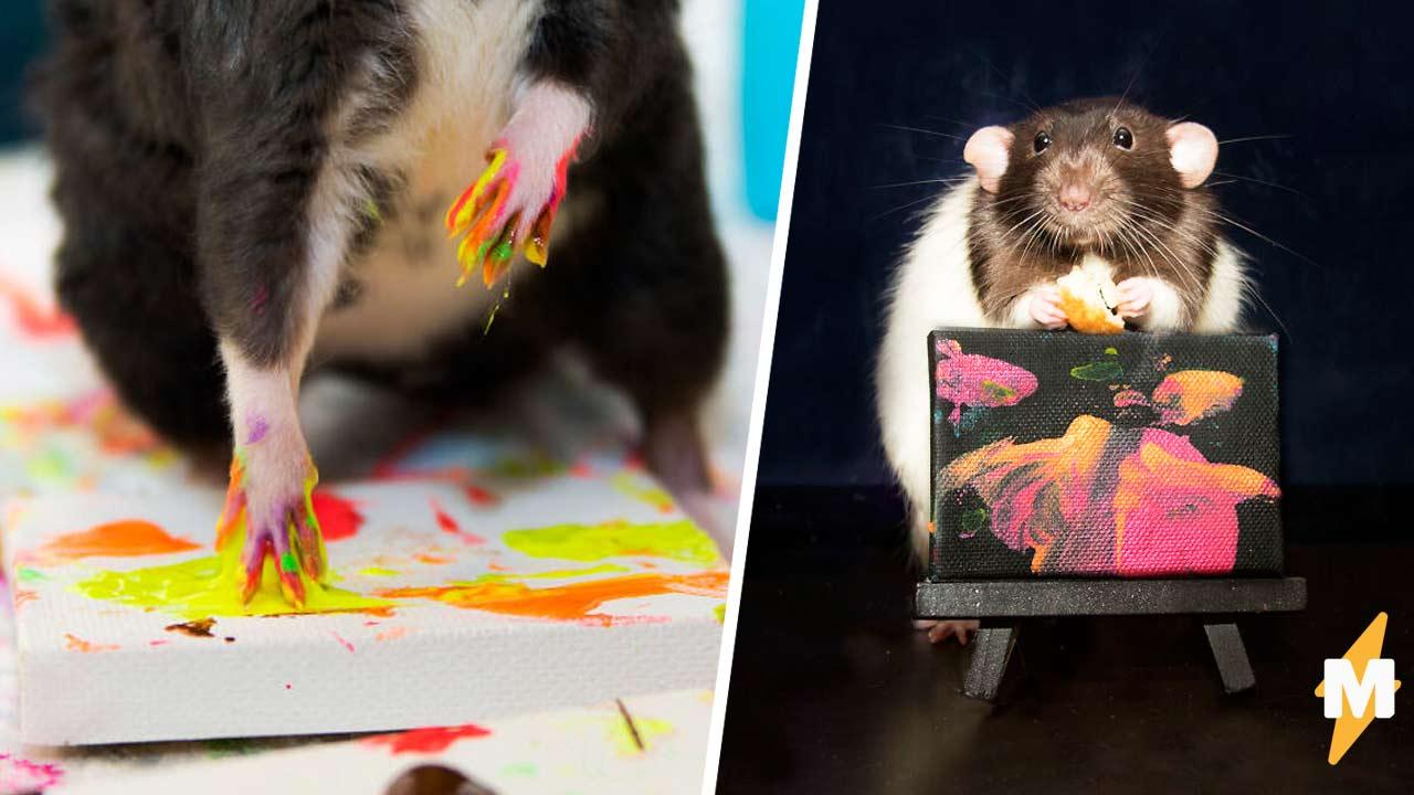 Ручные крысы пишут картины, а хозяйка продаёт их на аукционе