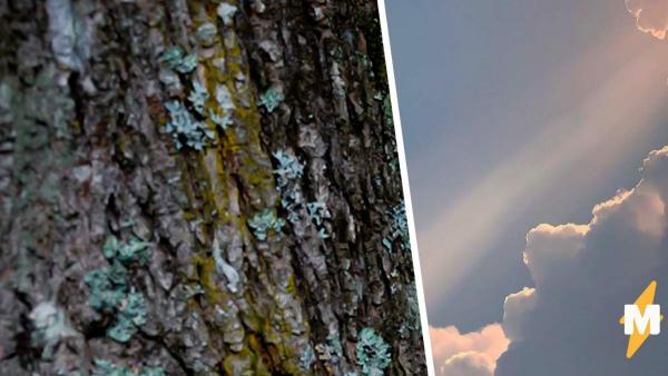 Жители деревни увидели в дереве Иисуса, но верить в чудо рано. Стоит только узнать, на каком месте оно выросло